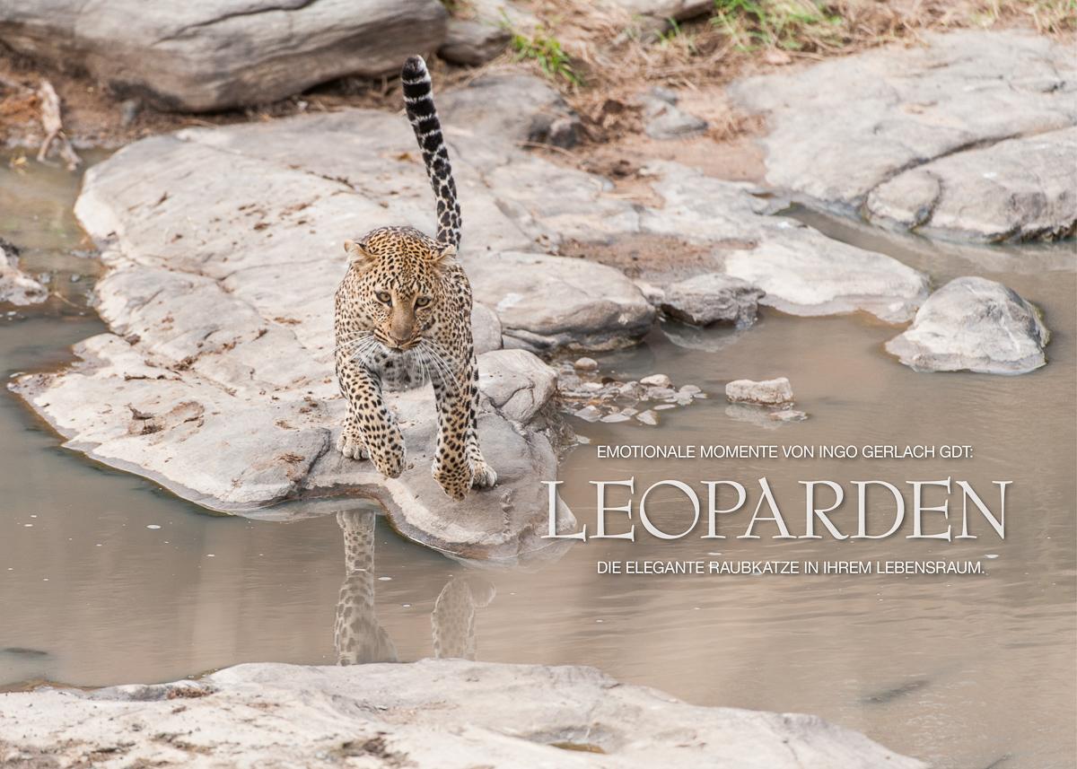 Kalender Leoparden