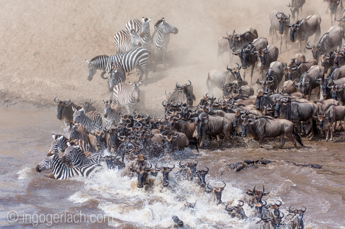 The great Migration_IWG0050