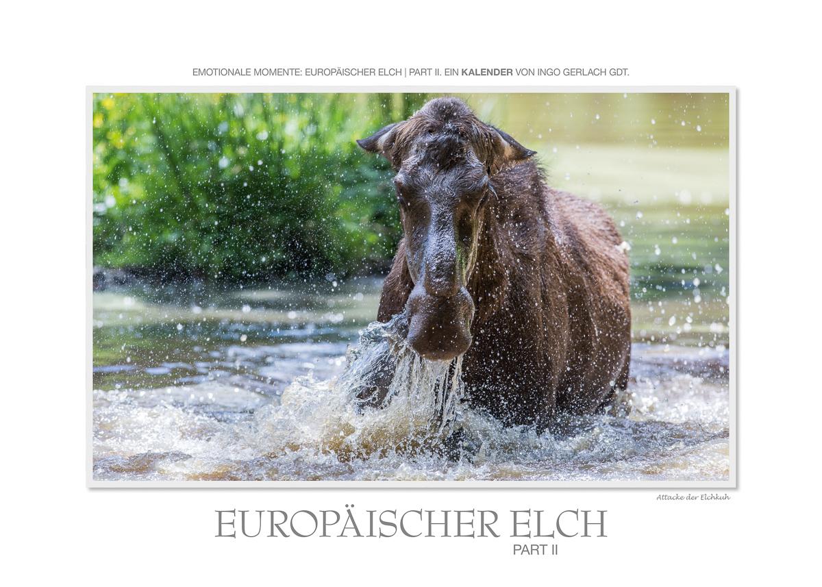 Kalender Elche II