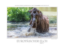 Kalender Europäischer Elch