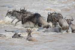 The great Migration_D3S3713