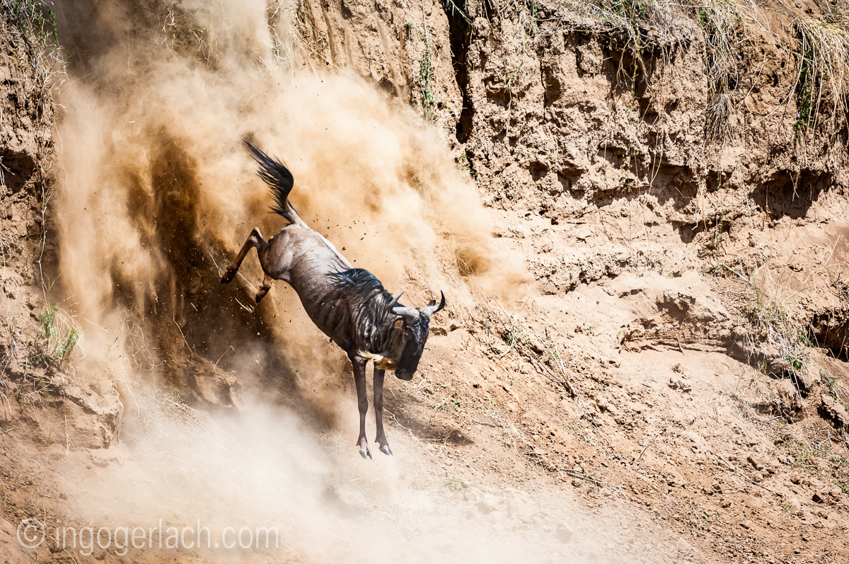 wildebeest jump to death_IWG4404
