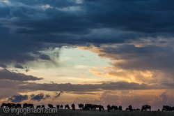 The great Migration_IGB6399