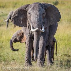 Elefanten_D4N_1528