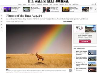 Mein Bild in THE TIMES und The Wall Street Journal...
