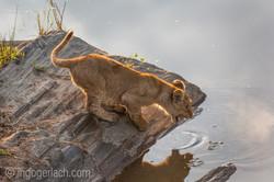 Der Mut der kleinen Löwen_IWG4462