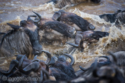 The great Migration_D3S8821