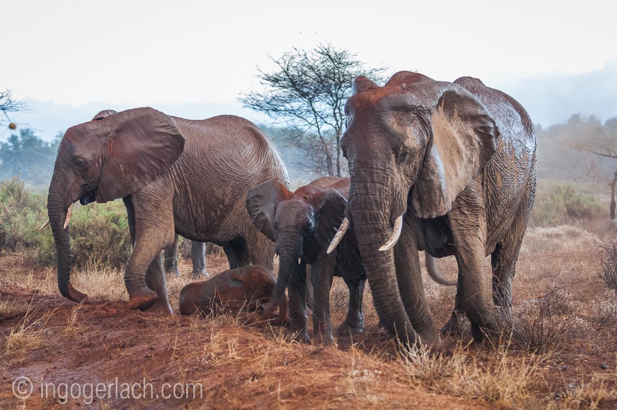 Elefanten im Regen_IGB7643