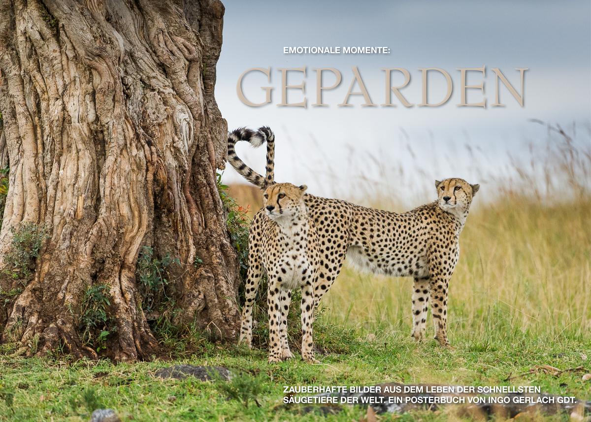 Kalender Geparden