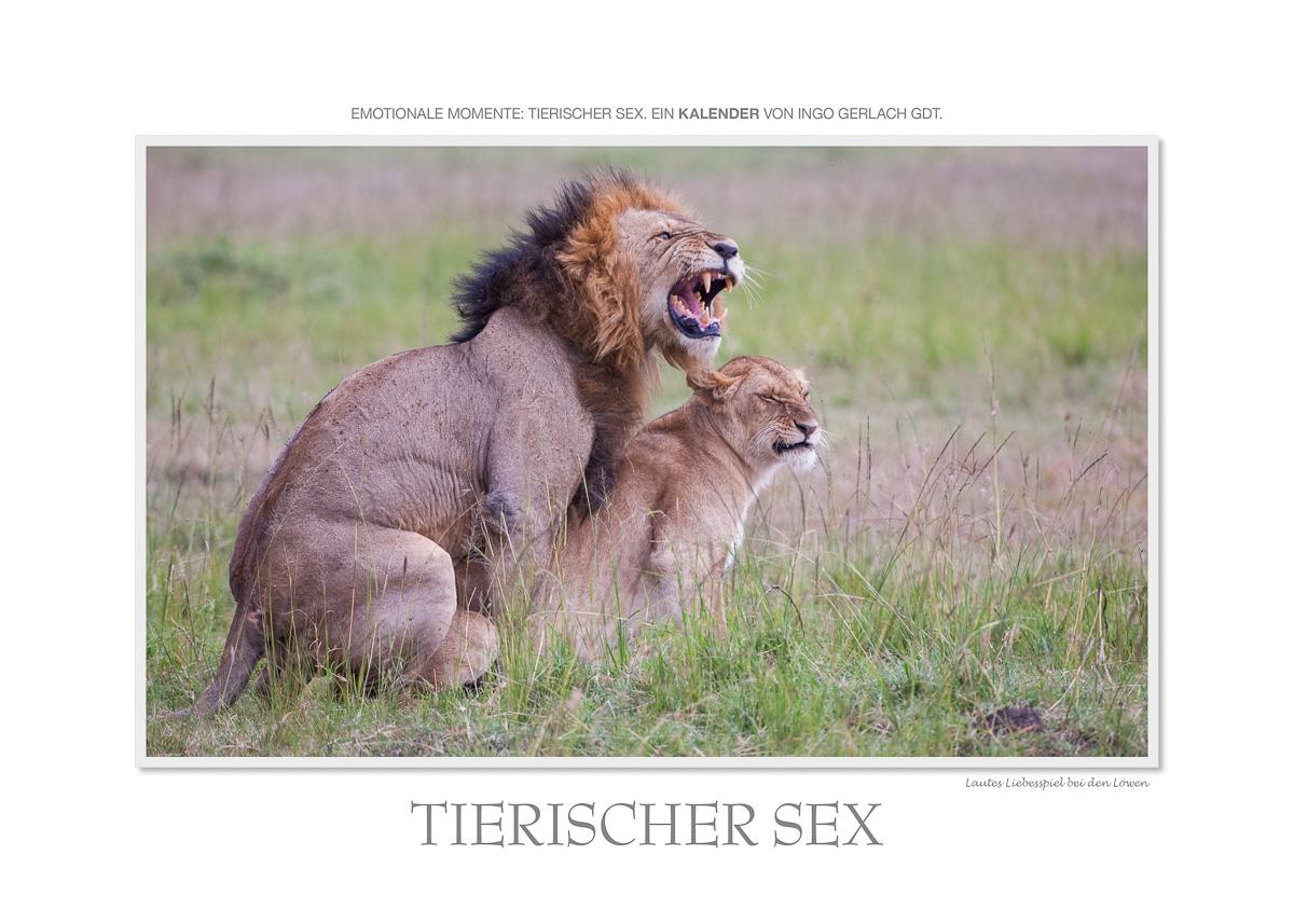 Kalender Tierischer Sex