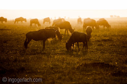 The great Migration_D3X5604