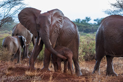 Elefanten im Regen_IGB7714