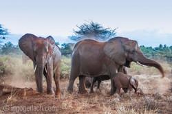 Elefanten im Regen_IGB7737