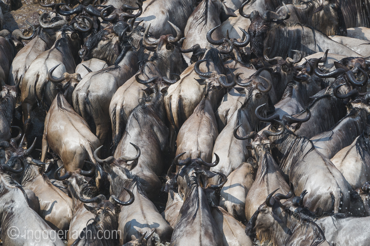 The great Migration_D3S2696