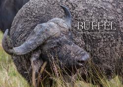 Kalender Büffel