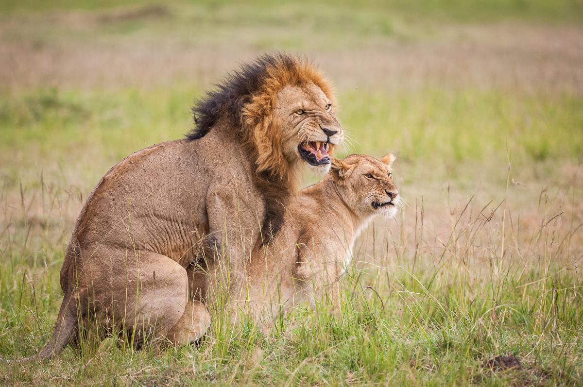Löwenkopula © Ingo Gerlach_IWG3764