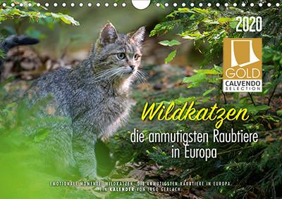Titel Kalender Wildkatzen mit Goldlogo