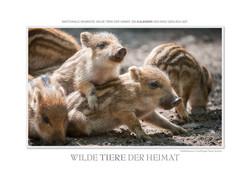 Kalender Wilde Tiere der Heimat