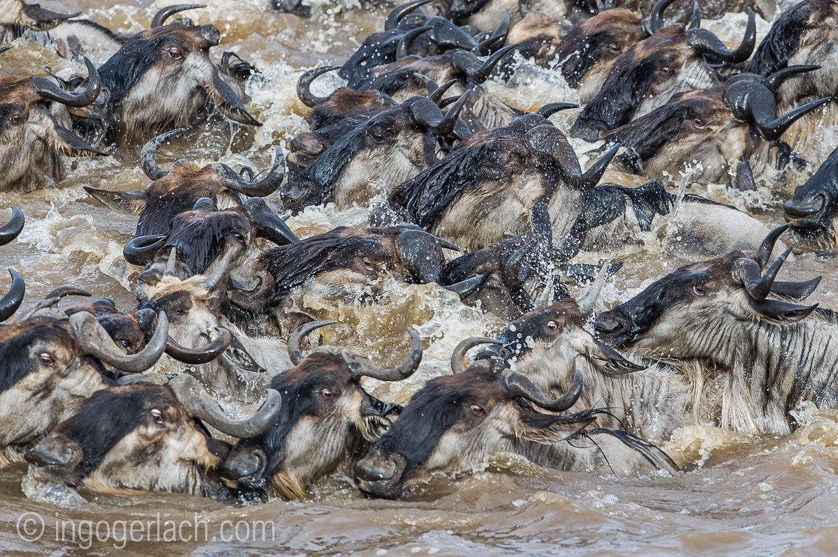 The great Migration_D3S9257