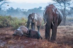 Elefanten im Regen_IGB7667