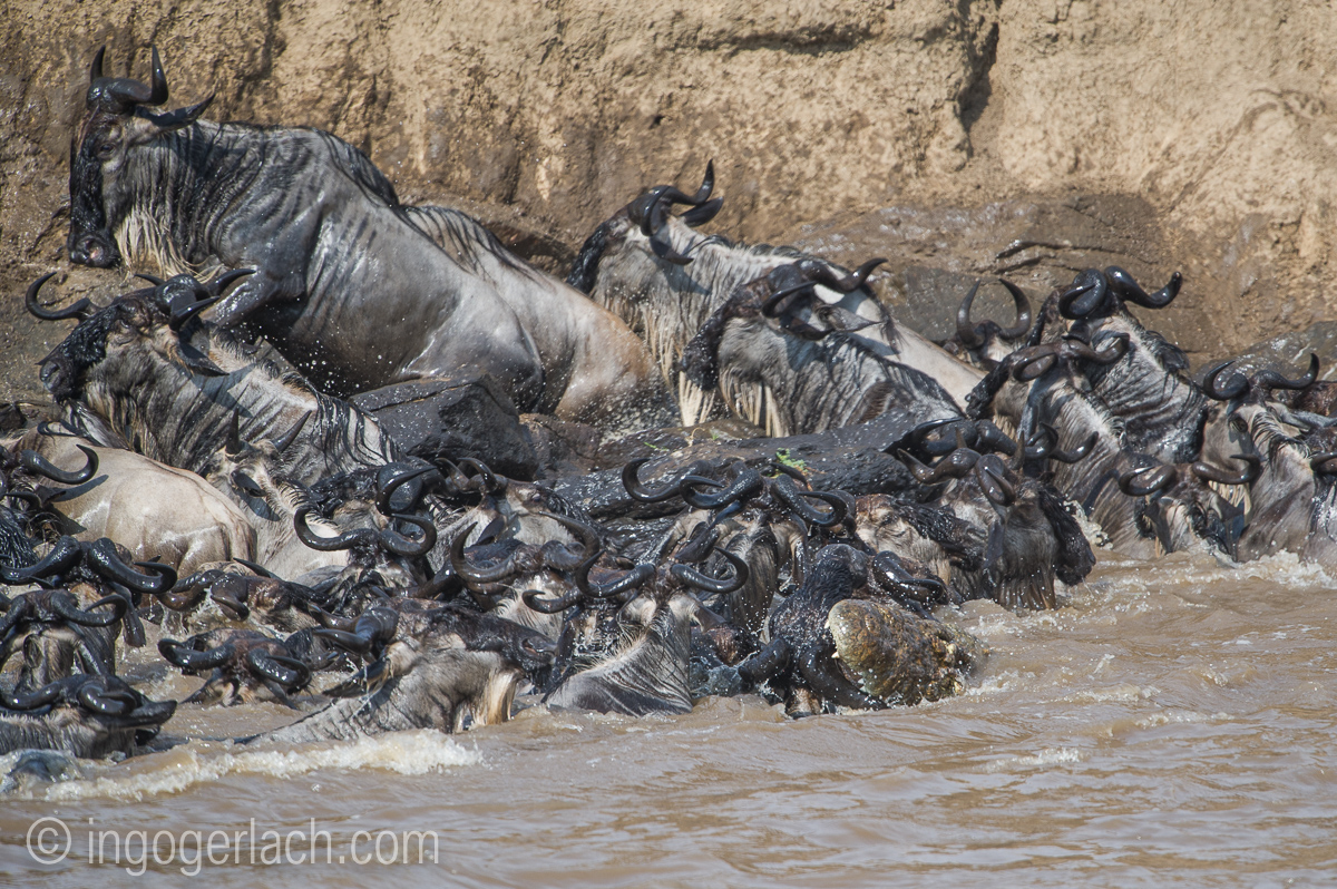 The great Migration_D3S2715