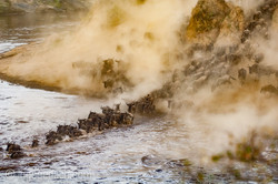 The great Migration_IGB6289