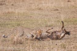Geparden auf Jagd_IG37608