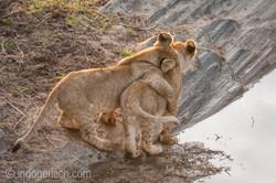 Der Mut der kleinen Löwen_IWG4451
