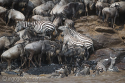 The great Migration_D3S2942