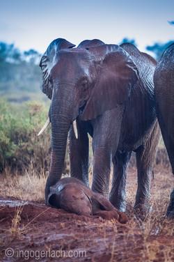 Elefanten im Regen_IGB7685