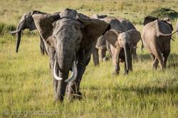 Elefanten_IG7_3576