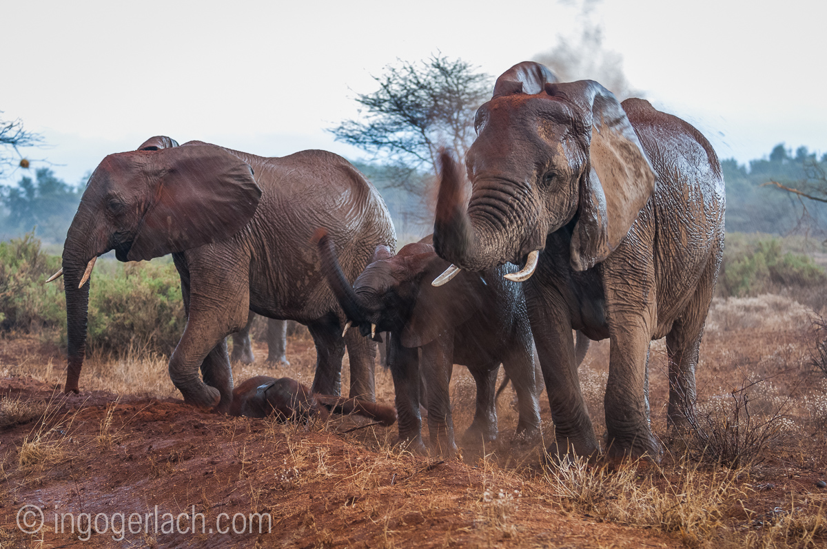 Elefanten im Regen_IGB7642