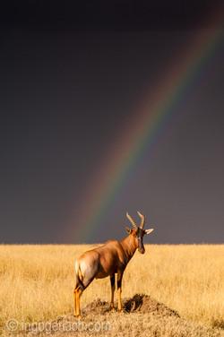 Over the Rainbow_Topi_IWG0046