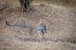 Mama Leopard mit ihren Babys_IGB1431