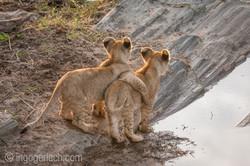 Der Mut der kleinen Löwen_IWG4449