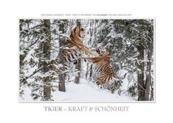 Kalender Tiger - Kraft und Schönheit