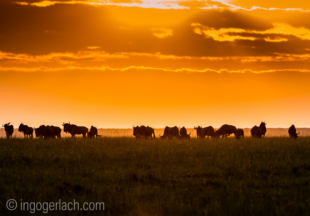 The great Migration_D3S7212