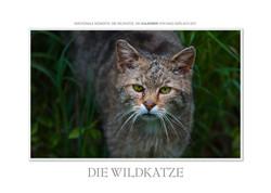 Kalender Die Wildkatze