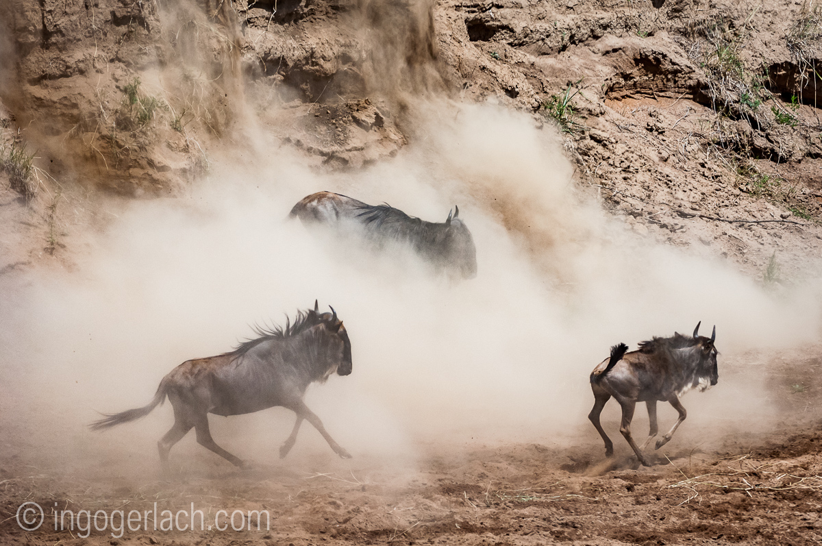 wildebeest jump to death_IWG4320