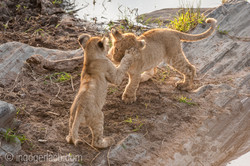 Der Mut der kleinen Löwen_IWG4456