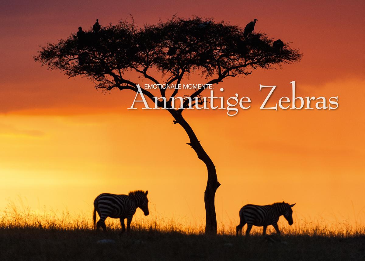 Kalender Anmutige Zebras