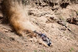 wildebeest jump to death_IWG4393