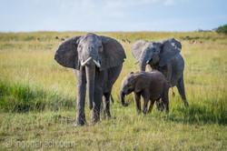 Elefanten_D4N_1534