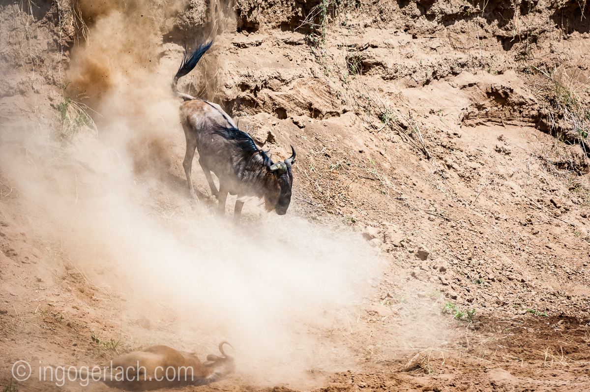 wildebeest jump to death_IWG4411
