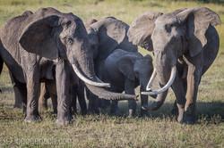 Elefanten_D4N_1571