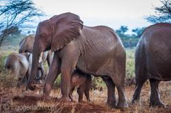 Elefanten im Regen_IGB7706