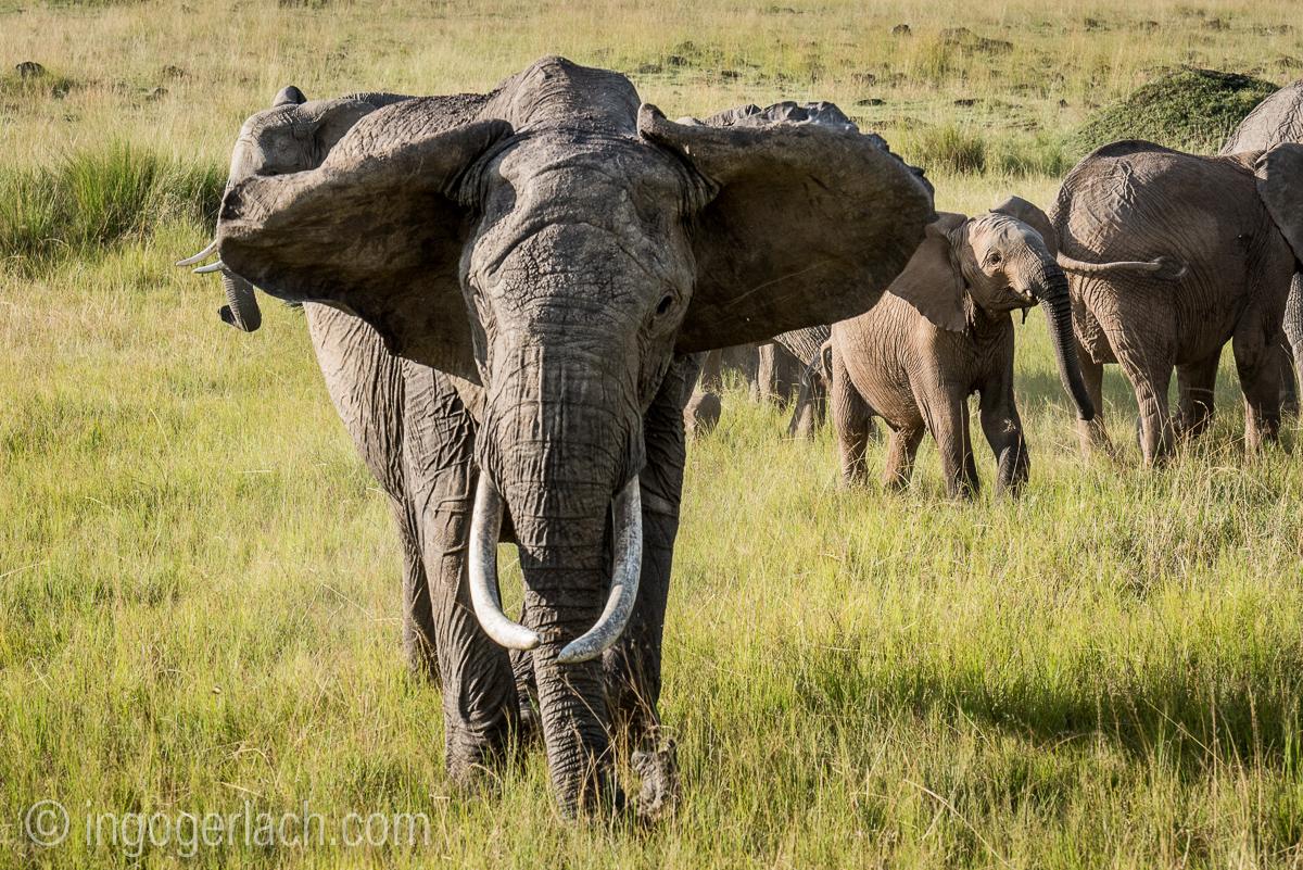 Elefanten_IG7_3581
