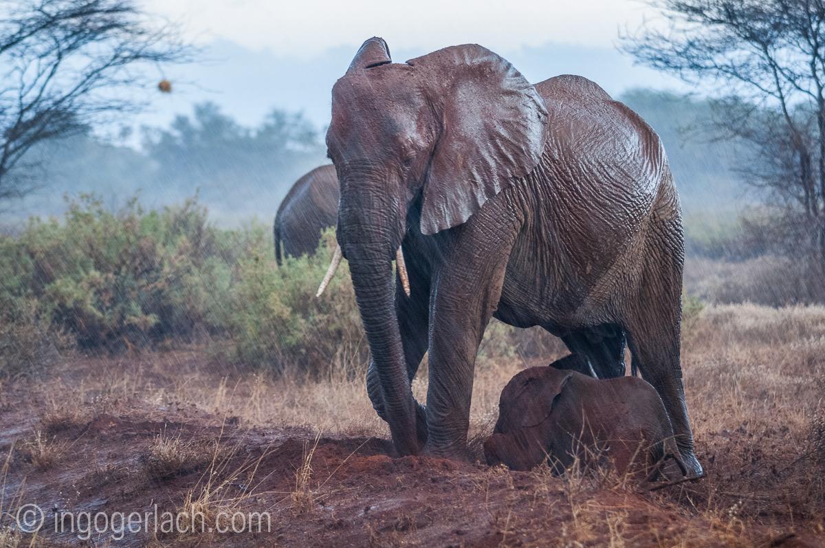 Elefanten im Regen_IGB7658