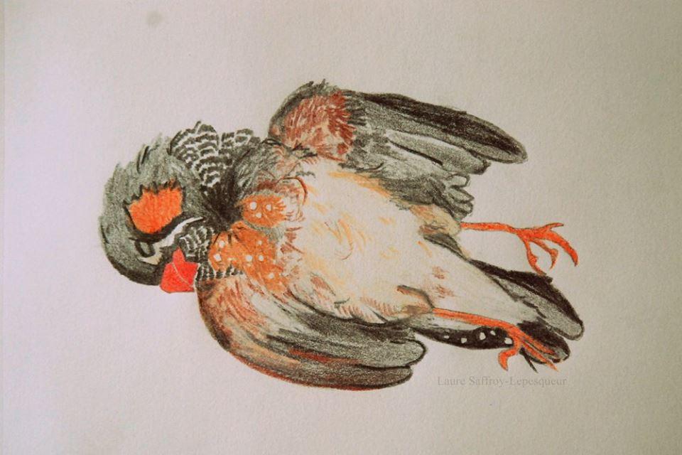 Le jeune oiseau mort