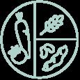 équilibre alimentaire, composition assiette santé